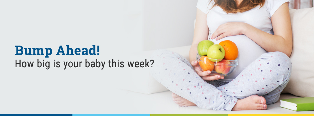 Bump Ahead! How big is your baby this week?
